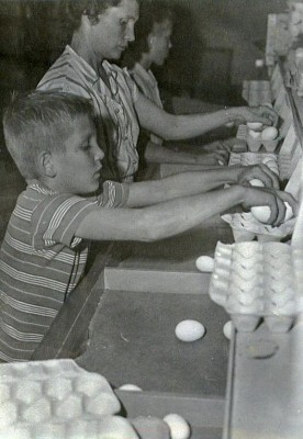 10-David-Zelma-and-Kent-packing-eggs