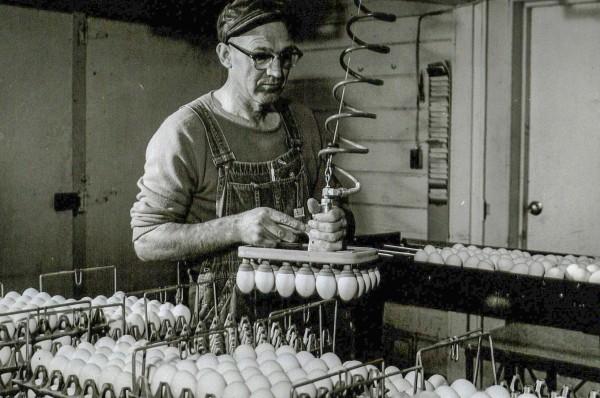 15-Marlow-vacuum-eggs